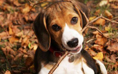 7 Etapas para adiestrar un perro a soltar una pelota u otro objeto