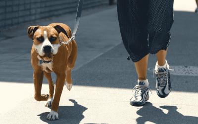 12 Ventajas de tener un perro que no tira de la correa al pasear