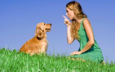 5 Ventajas de tener un perro adiestrado