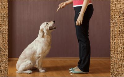 7 Consejos para hacer que un perro se quede quieto