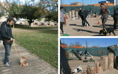 Adiestramiento Canino a domicilio vs adiestramiento en un club