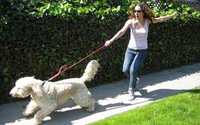Guía fácil para adiestrar a un perro a no tirar de la correa