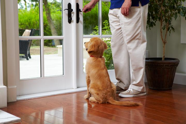 Como enseñar a un Cachorro a hacer sus necesidades en la calle