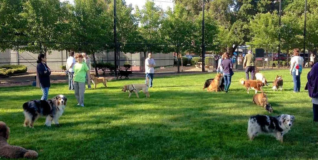 10 Trucos: Enseñar a un perro a obedecer en presencia de otros perros