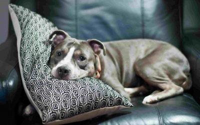 3 Consejos efectivos para enseñar a un perro a no subir al sofá o la cama
