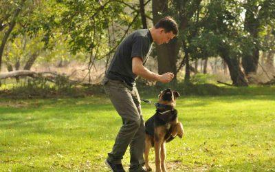 10 Consejos clave para tener un perro adiestrado
