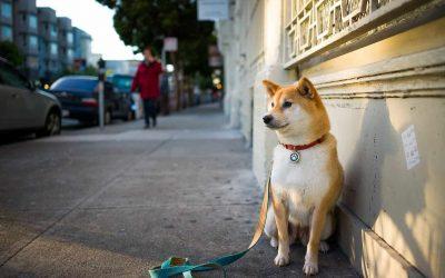 7 Etapas para adiestrar un perro a quedarse quieto cuando esta sentado