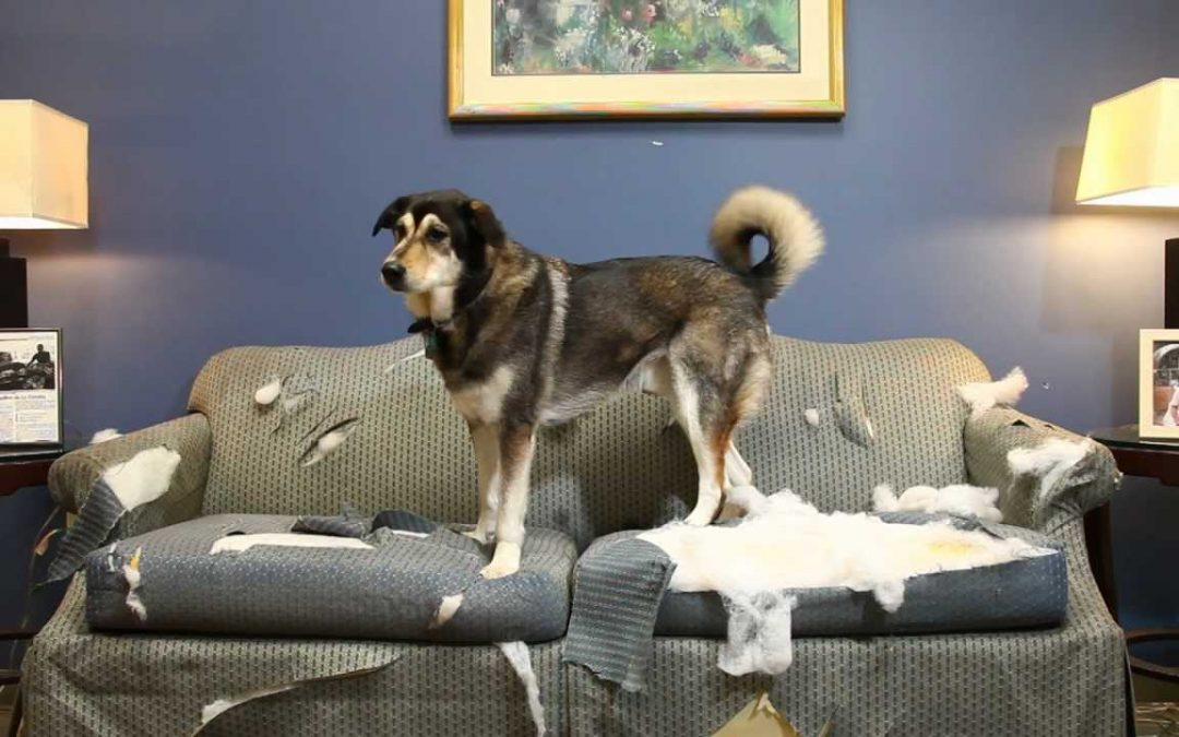 4 Consejos para evitar que tu perro muerda objetos o muebles