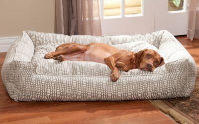 8 Etapas para adiestrar un perro a ir a su sitio