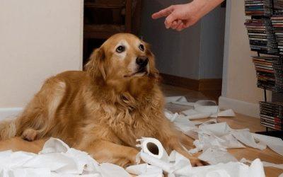 27 Errores en el Adiestramiento de Perros que Debes Conocer