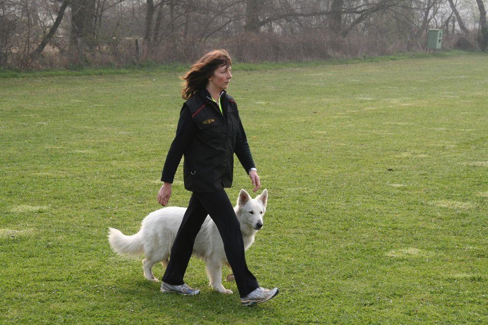 8 Etapas para adiestrar a tu Perro a andar a tu lado sin correa