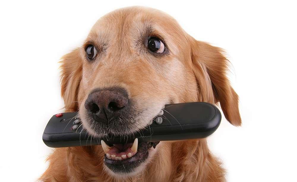 6 Consejos para evitar que un perro robe objetos