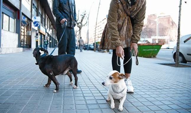 6 Lugares ideales para entrenar un perro en Barcelona