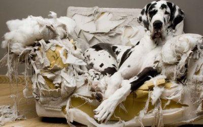 Mi perro destroza la casa: Causas y 3 consejos