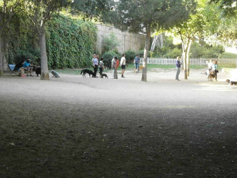 Pipicans en la Eixample de Barcelona