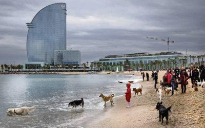 Playas de Barcelona y alrededores para llevar a tu perro