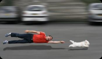 ¿Por qué los perros tiran de la correa?