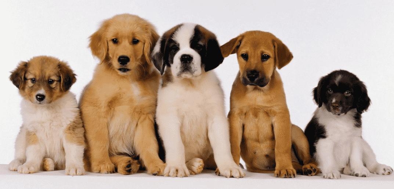 ¿Que raza de perro me conviene?
