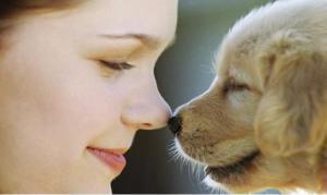 ¿Merece la pena adiestrar mi Perro? 5 Razones que te convencerán