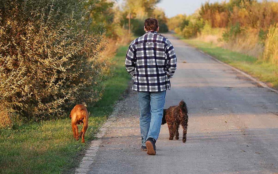 9 Ventajas de enseñar a tu perro a andar a tu lado sin correa