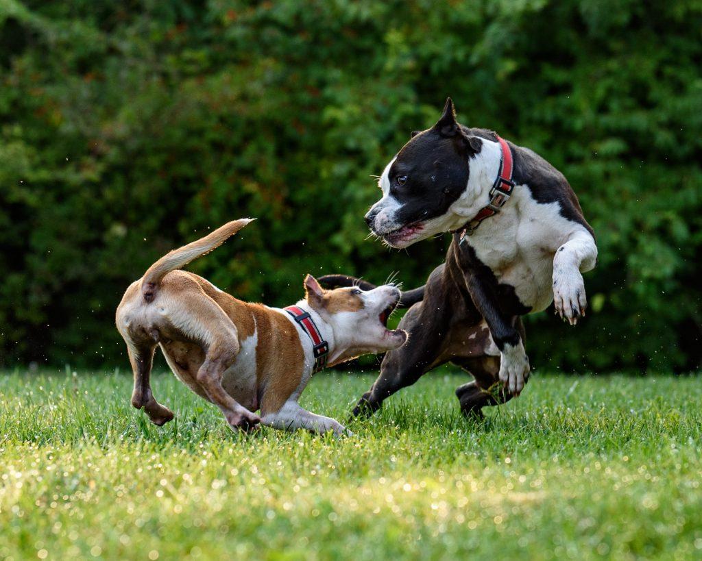 Buena comunicación de los perros