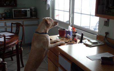 ¿Cuáles son los mejores perros para pisos?