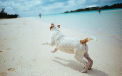 Consejos para reducir el síndrome postvacacional en perros