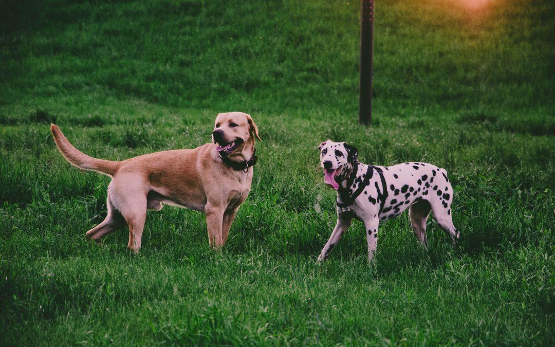 La comunicación de los perros