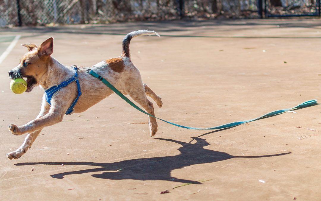 Multas a propietarios de perros