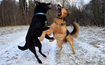Introducción al lenguaje corporal de los perros