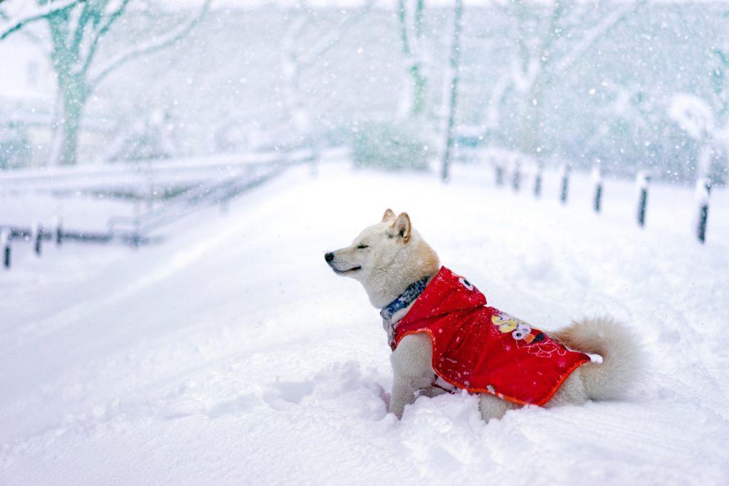 Abrigo para perros en la nieve