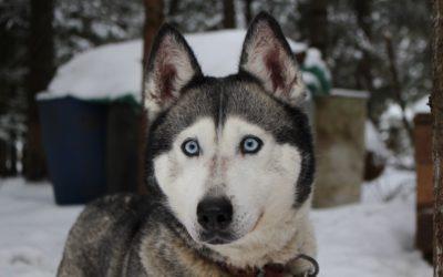 El invierno y los perros en la nieve