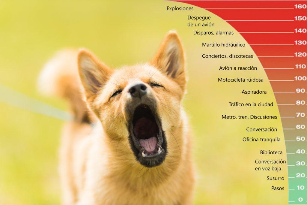 Los decibelios y el oído de los perros.