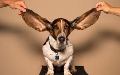 Todo lo que necesitas saber del oído de los perros.