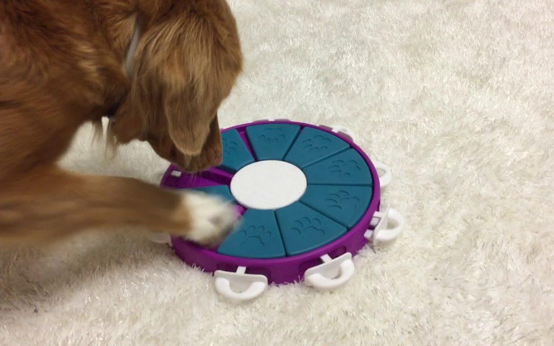 COVID-19: Ejercicios con tu perro durante la cuarentena – Parte 1