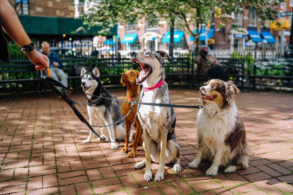 La integración social de los perros