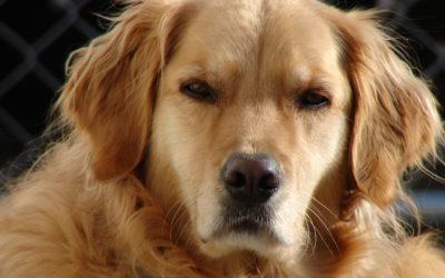 ¿Existen los celos en los perros?