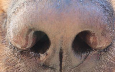 COVID-19: Ejercicios con tu perro durante la cuarentena – Parte 2