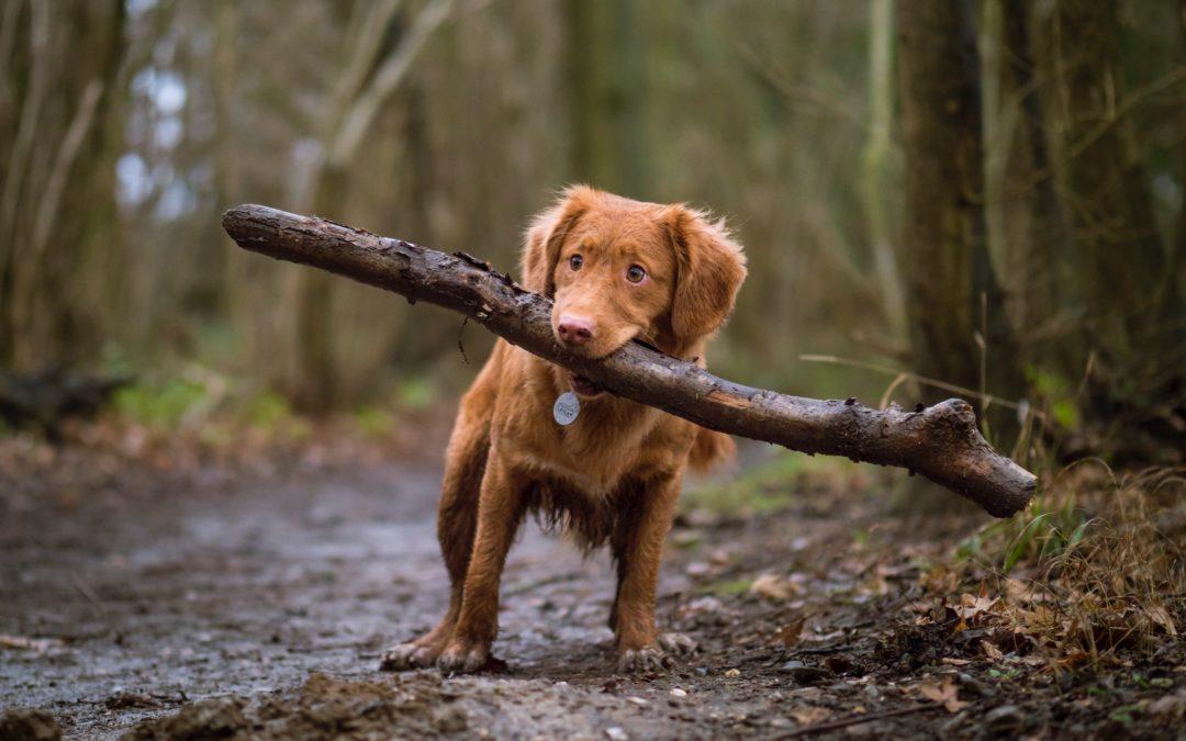 ¿Cómo funciona el aprendizaje de los perros?