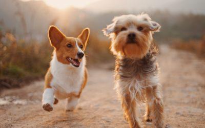 La integración social de los perros.