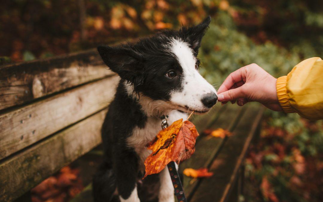 COVID-19: Ejercicios con tu perro durante la cuarentena – Parte 3