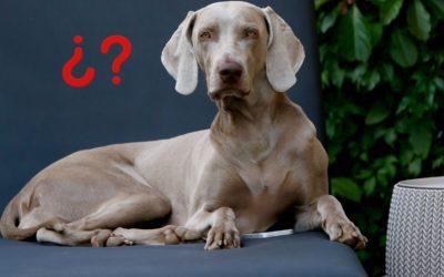 ¿Sabes cómo dar un buen feedback a tu perro?