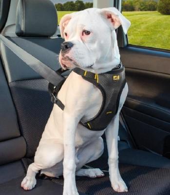 Viajar con perros en coche