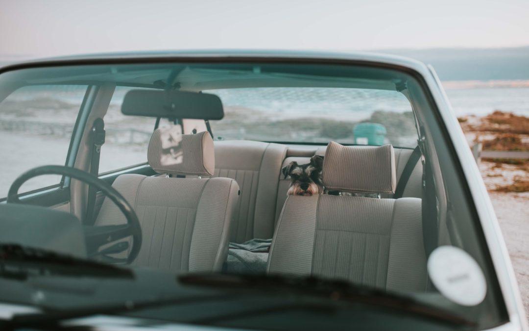6 consejos para viajar con perros en coche