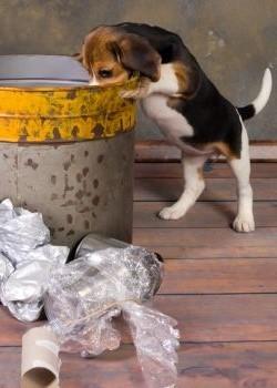 Por qué los perros comen de la basura