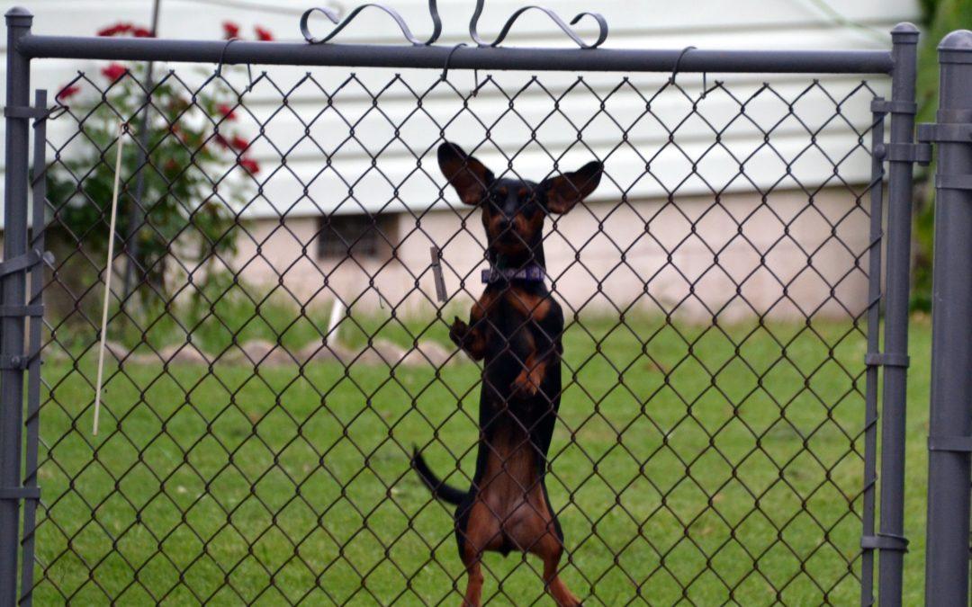 ¿Cómo enseñarle a tu perro a no saltar?