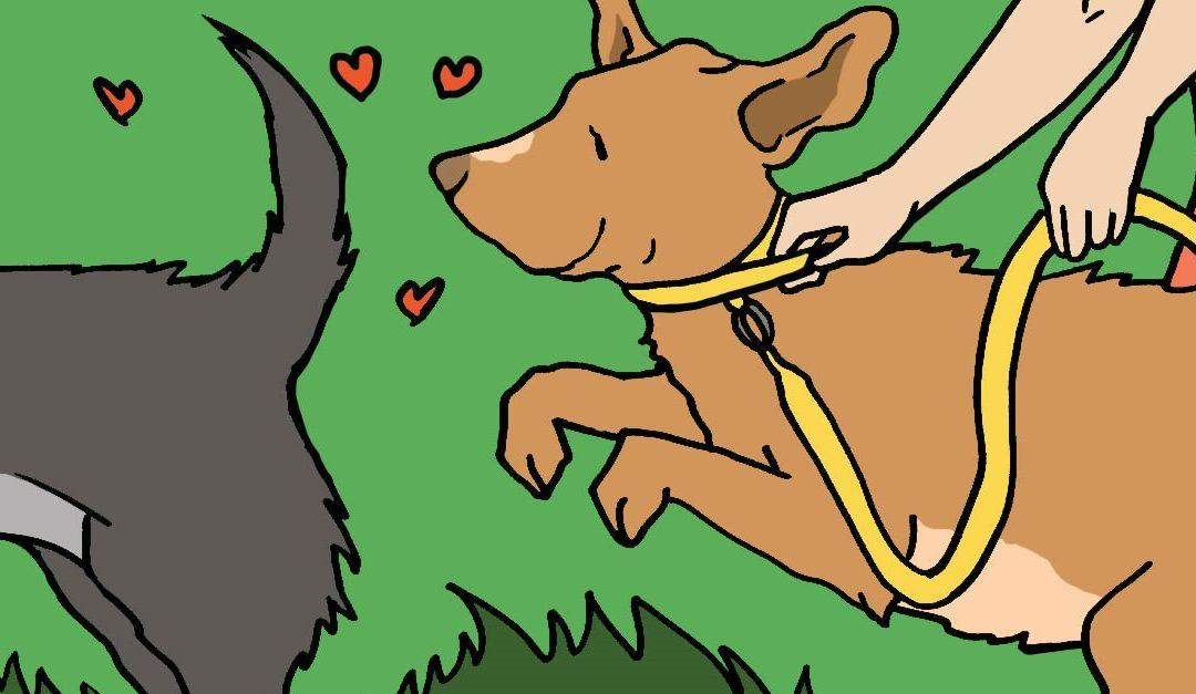 ¿Sabes reconocer el celo de los perros?