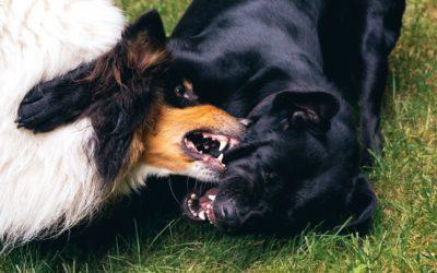 Peleas entre perros