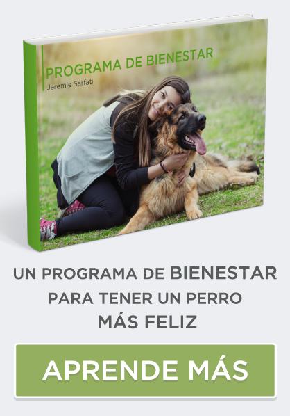 guia de bienestar para perros