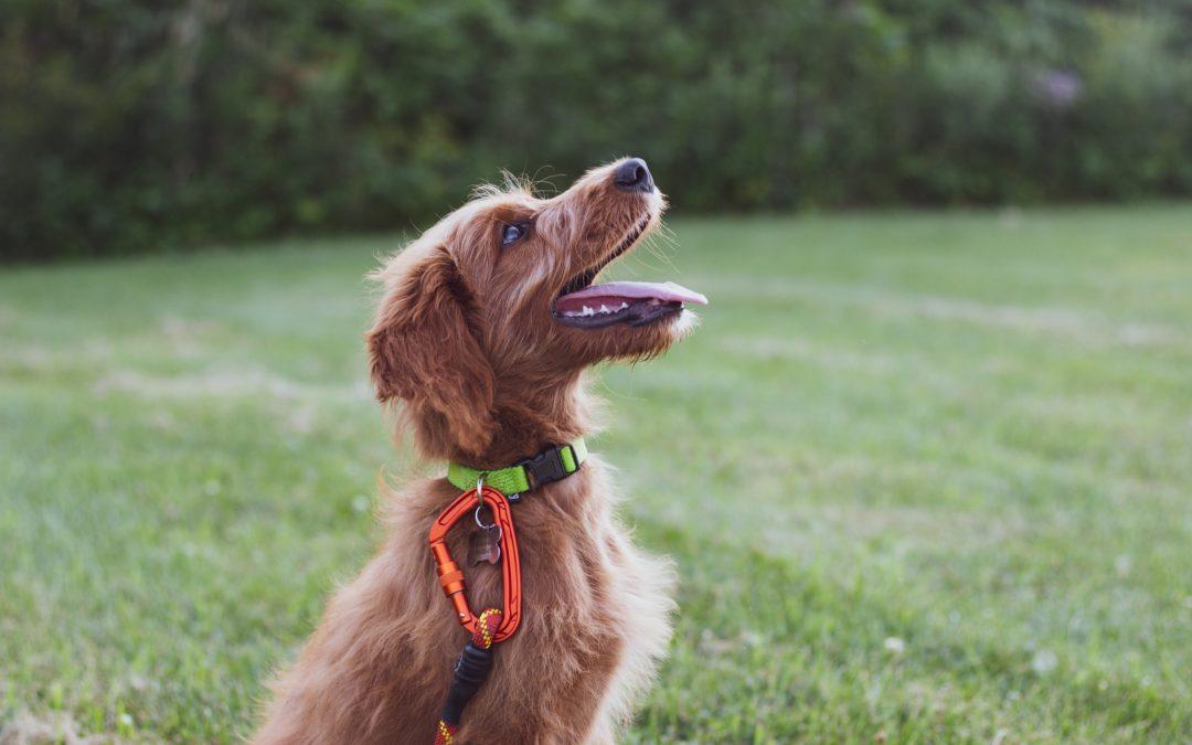 Las claves del adiestramiento canino